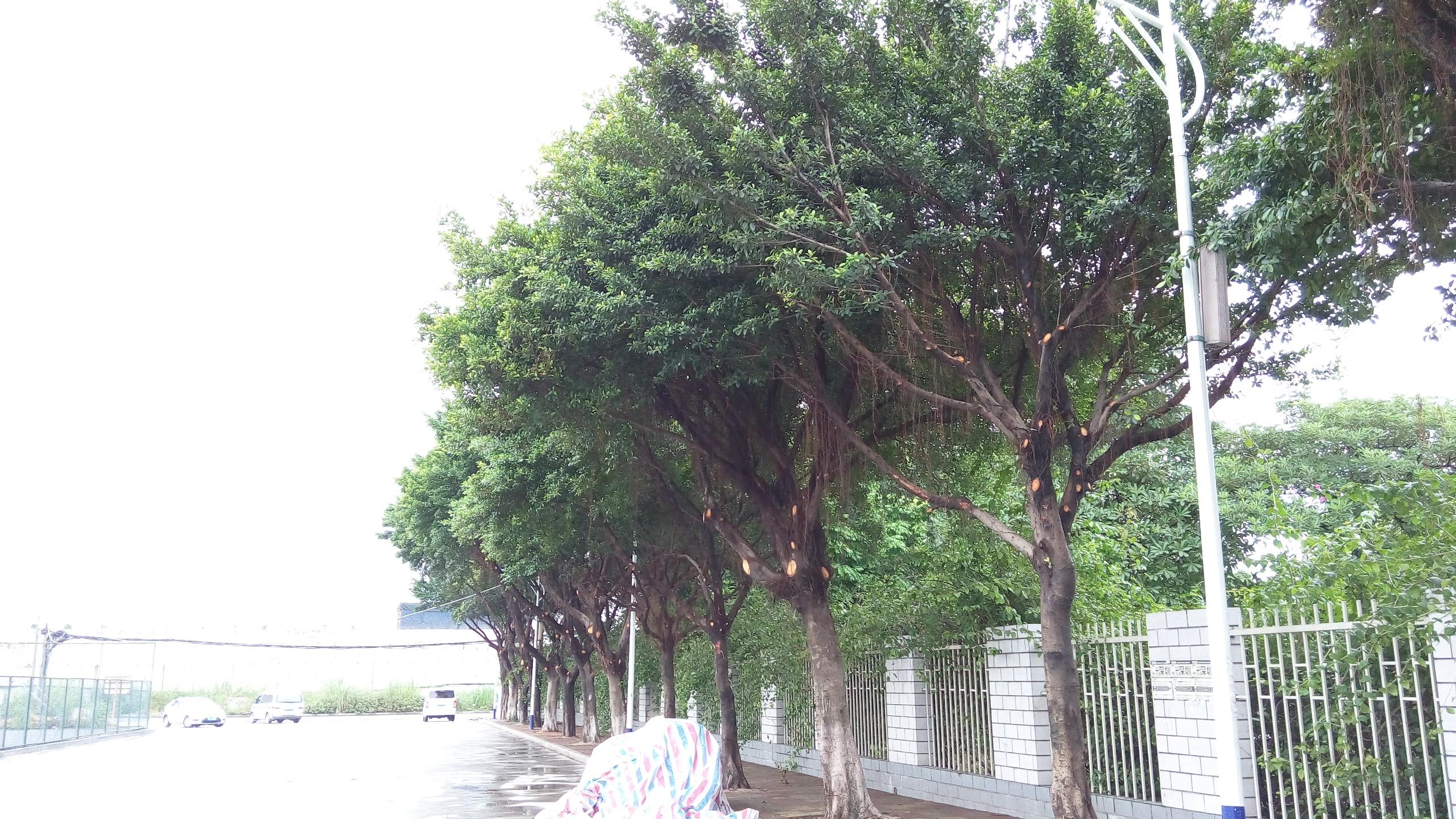 环艺树手绘图片